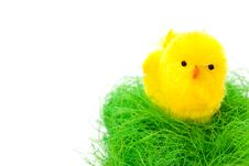 Free Biddy In Easter Basket Royalty Free Stock Photos - 18302018