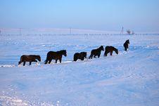 Free Horses Royalty Free Stock Image - 18303256