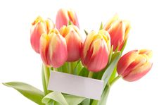 Free Flowers For You Royalty Free Stock Images - 18303489