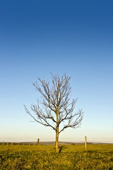 Leafless  Tree Royalty Free Stock Images