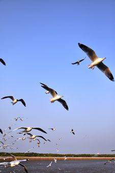 Free Seagulls Royalty Free Stock Photo - 18305685