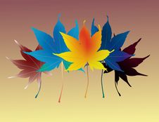Free Colourful Leaves Royalty Free Stock Photo - 18307155