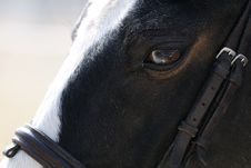 Free Horse Closeup Stock Photos - 18307933