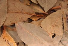 Free Bay Leaves Stock Images - 18308884