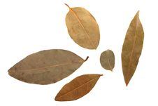 Bay Leaves Royalty Free Stock Photos