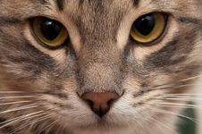 Free Portrait Of A Little Cat Stock Photo - 18309990