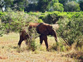 Free Old Elephant Stock Photography - 18316442