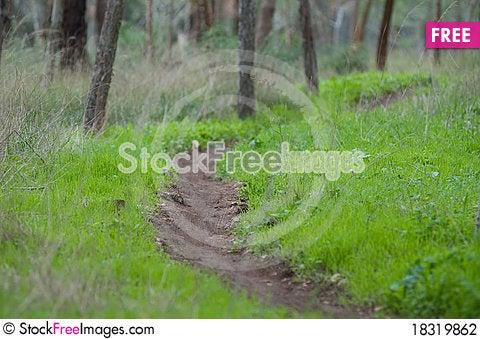 Free Tree Trunk Stock Photography - 18319862