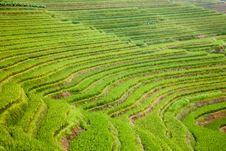 Free Rice Terraces Royalty Free Stock Images - 18313299