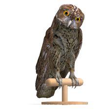 Free Tawny Owl Bird Stock Photos - 18315013