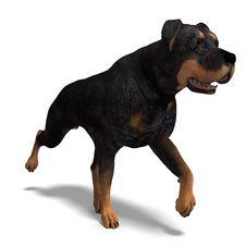 Free Rottweiler Dog Stock Photography - 18315042