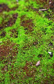 Free Green Moss Background Royalty Free Stock Photo - 18315245