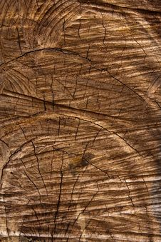 Free Cut Wood Texture Royalty Free Stock Photo - 18316375