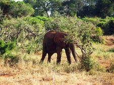 Free Old Elephant Royalty Free Stock Photo - 18316485