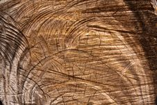 Free Cut Wood Texture Royalty Free Stock Photos - 18316818
