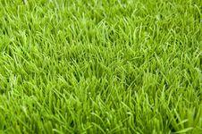 Free Grass Stock Photo - 18319920