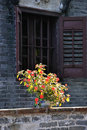 Free China Rose Flower In Front Of An Old Window Stock Image - 18323961