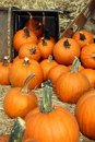 Free Pumpkins Falling Out Of Box Royalty Free Stock Photos - 18325698