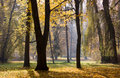 Free Trees In Autumn Park Royalty Free Stock Images - 18328299