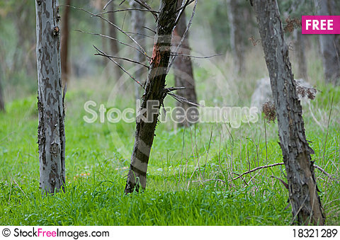 Free Tree Trunk Royalty Free Stock Images - 18321289