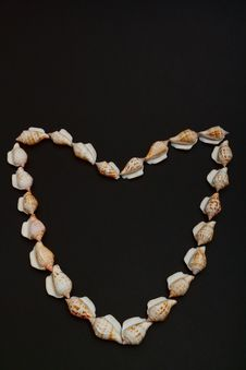 Free Shells In The Shape Of A Heart Stock Photography - 18320402
