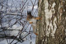 Free Squirrel Stock Photo - 18320600