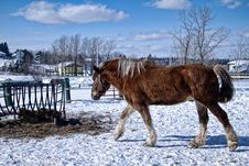 Free Horse In The Snow Royalty Free Stock Photography - 18320957