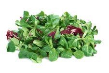 Free Corn Salad And Radicchio Stock Image - 18322691