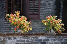 Free Two China Rose Flower In Courtyard Royalty Free Stock Photos - 18323928