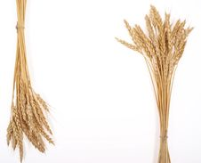 Free Wheat Ears Royalty Free Stock Images - 18324549