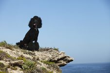 Free STandard Poodle On Beach Royalty Free Stock Photo - 18324765