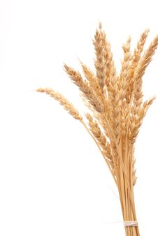 Free Wheat Ears Stock Photography - 18324782