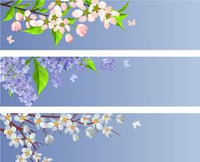 Free Set Of Blossoming Branches Stock Images - 18326554