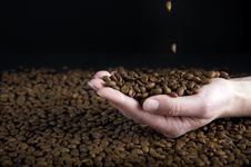Free Coffe Beans Royalty Free Stock Image - 18327936