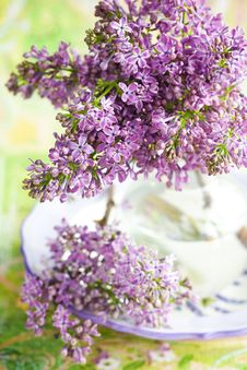 Free Lilac Royalty Free Stock Image - 18328536