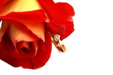 Free Close-up Isolated Red Rose And Diamond Ring Stock Photos - 18328543