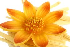 Free Isolated Flower Shape Candle Stock Photography - 18328662