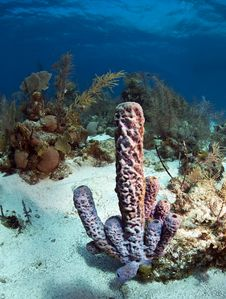 Free Coral Gardens Stock Photos - 18328773