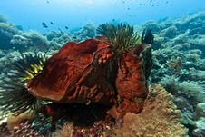 Coral Garden Indonesia Stock Image