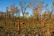 Termite Mounds Stock Photo