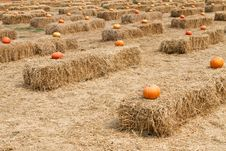 Pumpkin And Straw Stock Photography