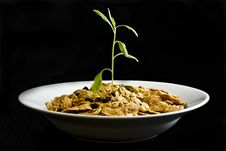 Plant Growing From Cereal On Black Royalty Free Stock Images