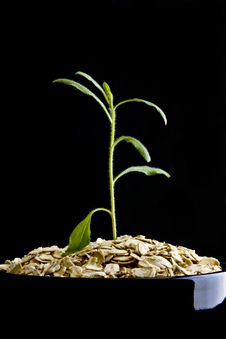 Plant Growing From Oatmeal On Black Stock Photo