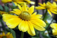 Free Yellow Flowers Stock Photos - 18334693