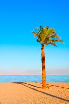 Free Tropical Beach Dream Royalty Free Stock Image - 18335676