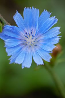 Free Beautiful Blue Flowers On Green Stock Images - 18335694