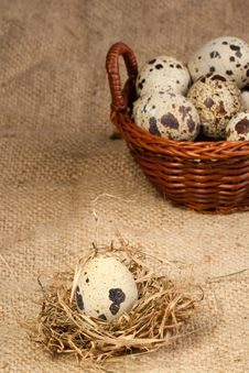 Free Quail Egg Royalty Free Stock Photo - 18335905