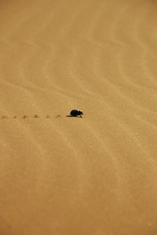Free Leaving Marks In The Sand Stock Photos - 18336683
