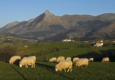 Free Grazing Sheep With Mountains Royalty Free Stock Image - 18337446