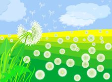 Free Vector Flowering Dandelion On A Green Meadow Royalty Free Stock Images - 18338159